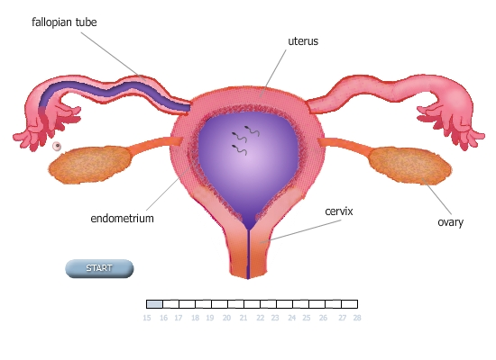 Ovulation Pregnant 44